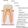 Сколько стоит зуб Наполеона? Любопытные факты о наших и не наших зубах