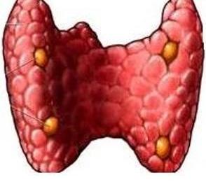 Паратгормон.  Хрупкие кости, кальций и фосфор в организме человека