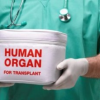 Центры трансплантации России. Полный список клиник, где занимаются пересадкой органов